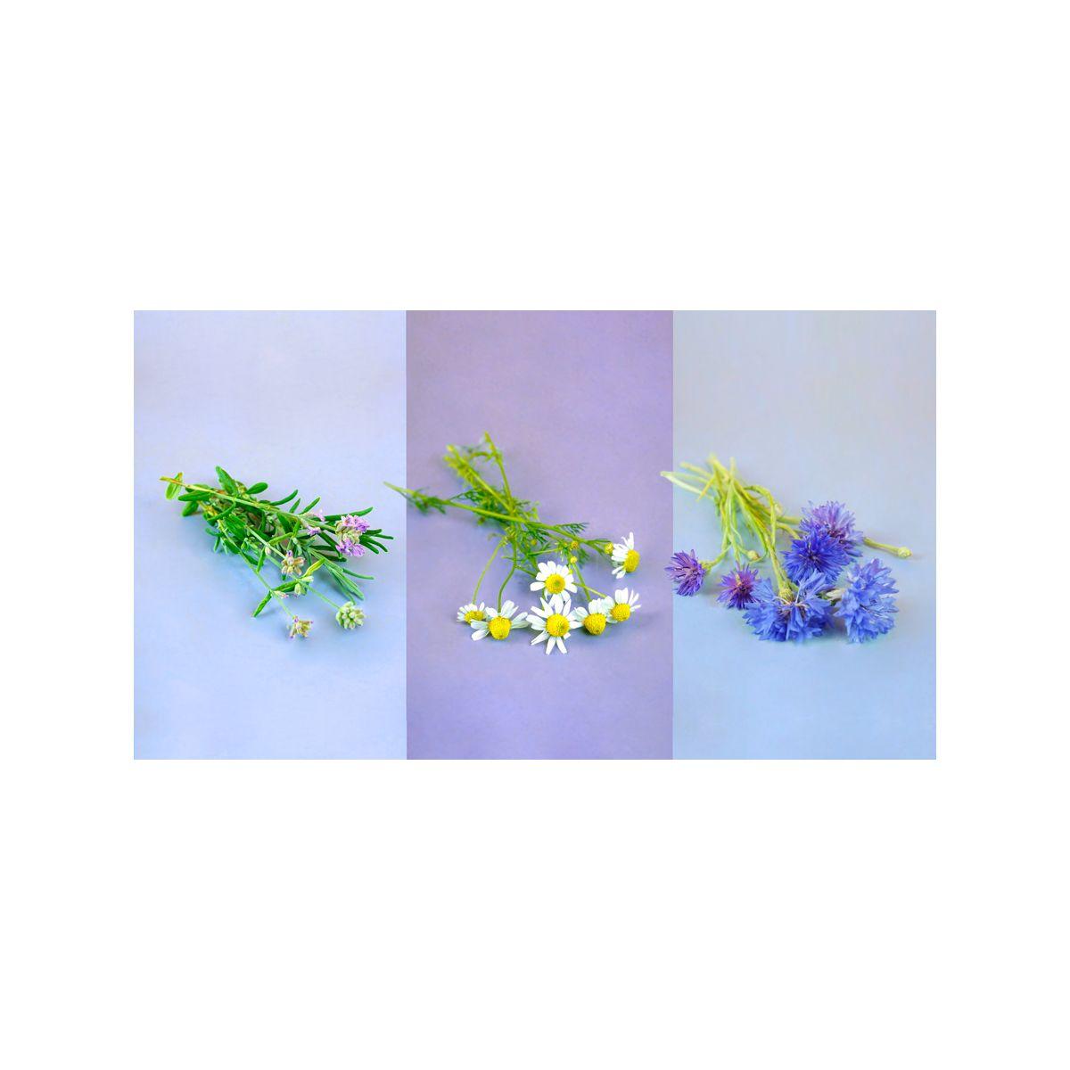 Recharge PRET A POUSSER Trio Fleurs - Camomille Lavande Bleuet