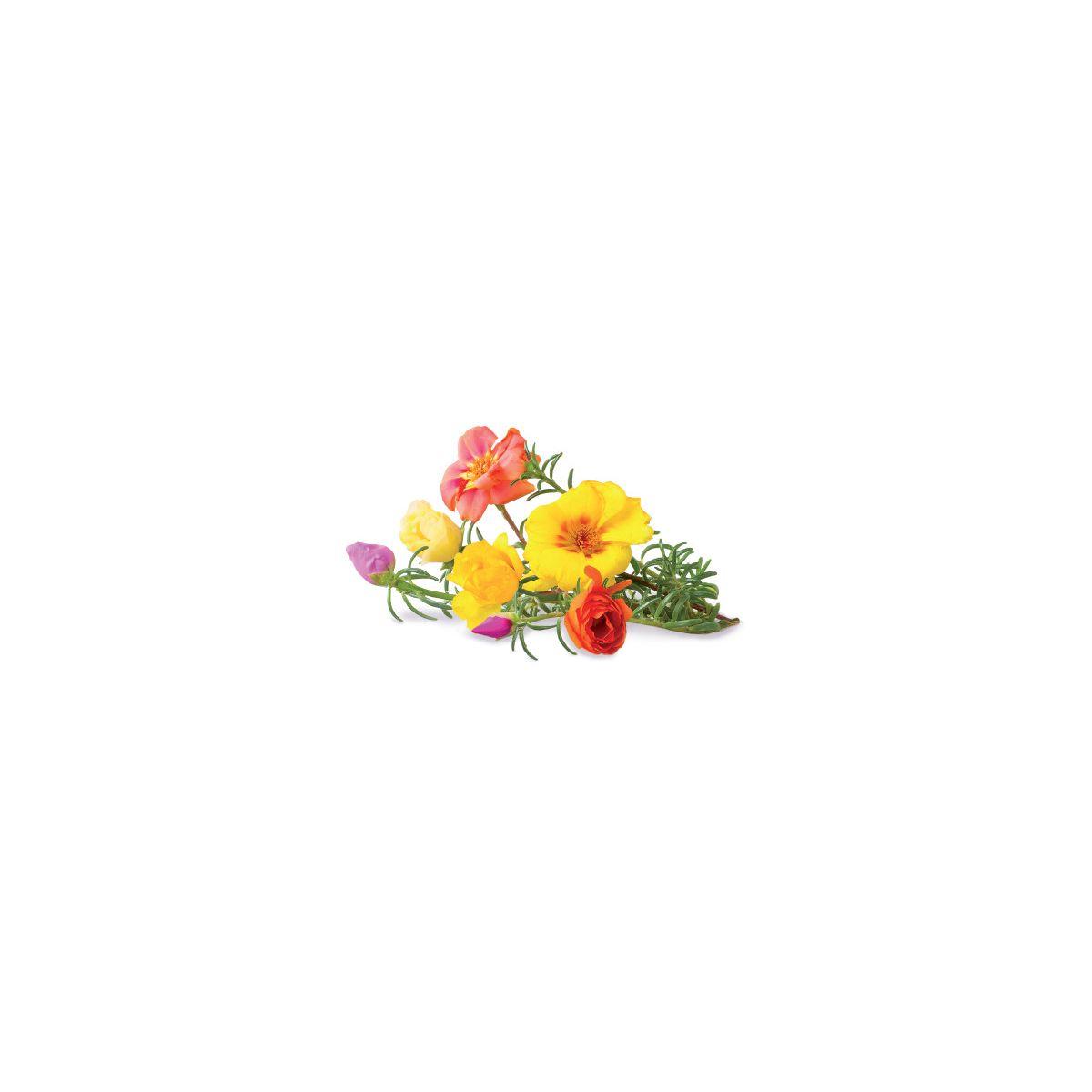 Recharge jardin intérieur CLICK AND GROW Rose (lot de 3)